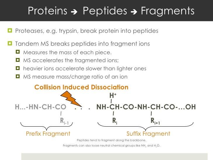 Proteins    Peptides    Fragments <ul><li>Proteases, e.g. trypsin, break protein into peptides </li></ul><ul><li>Tandem...