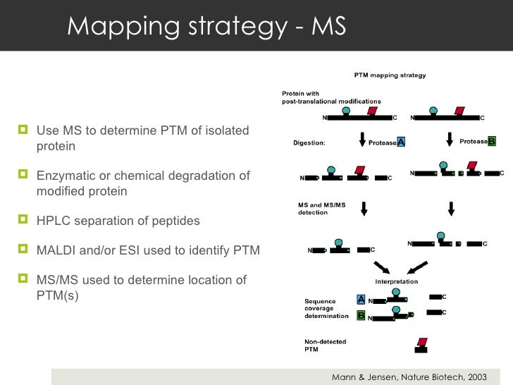 Mapping strategy - MS <ul><li>Use MS to determine PTM of isolated protein </li></ul><ul><li>Enzymatic or chemical degradat...
