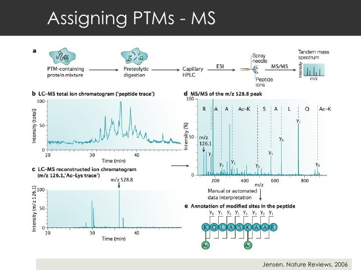 Assigning PTMs - MS Jensen, Nature Reviews, 2006