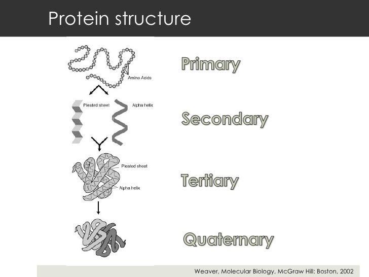 Protein structure Weaver, Molecular Biology, McGraw Hill: Boston, 2002