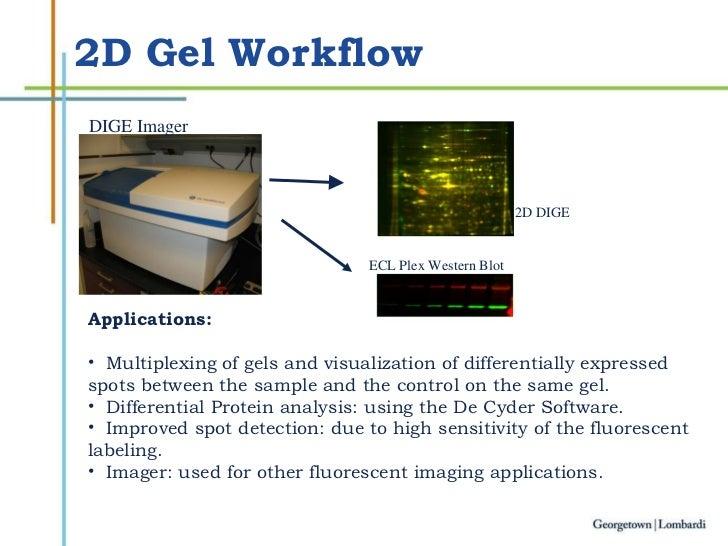 2D Gel Workflow <ul><li>Applications: </li></ul><ul><li>Multiplexing of gels and visualization of differentially expressed...
