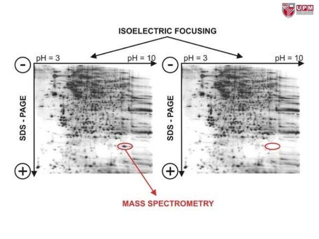 Proteomics Processes and Applications