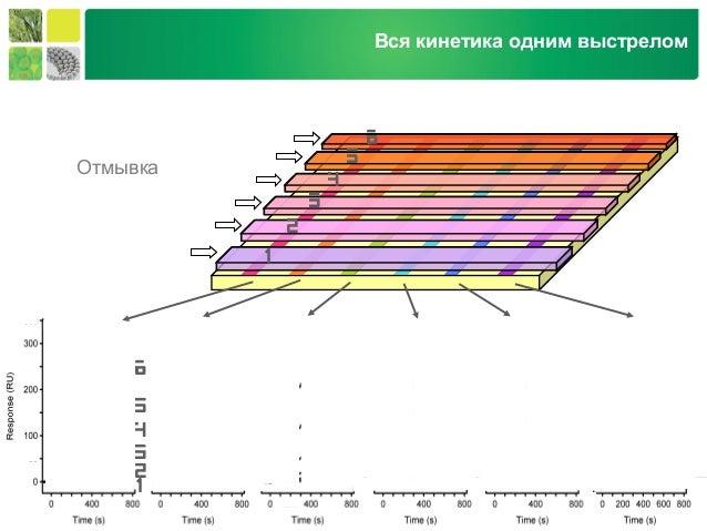 Life Science Group 1.1 3.3 11 100 nM 33 0.37 analyte 1.1 3.3 11 100 nM 33 0.37 Отмывка 1 2 3 4 5 6 1 2 3 4 5 6 Вся кинетик...