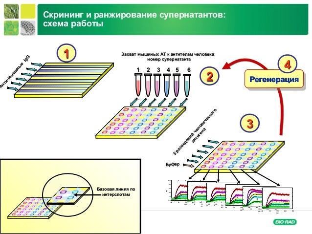 Life Science Group Анти-мы ш ины е Анти-мы ш ины е IgG IgG 1 2 3 4 5 61 2 3 4 5 6 Захват мышиных АТ к антителам человекаЗа...