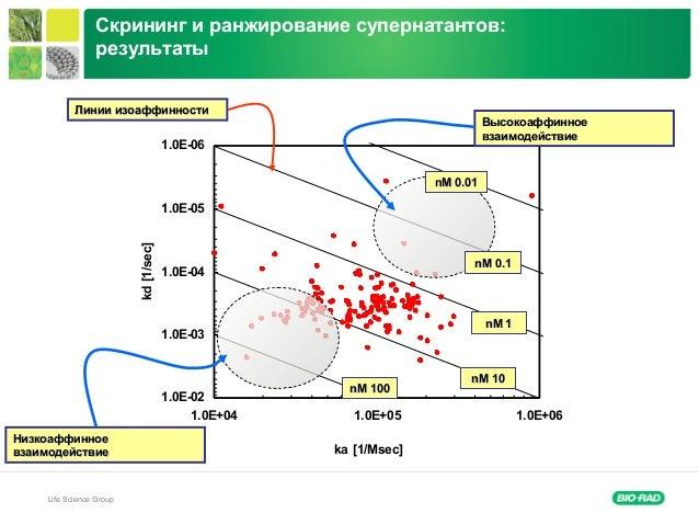 Life Science Group 1.0E-06 1.0E-05 1.0E-04 1.0E-03 1.0E-02 1.0E+04 1.0E+05 1.0E+06 ka [1/Msec] kd[1/sec] Скрининг и ранжир...