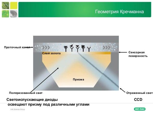 Life Science Group Геометрия Кречманна Призма Поляризованный свет Отраженный свет Слой золота Сенсорная поверхность Проточ...