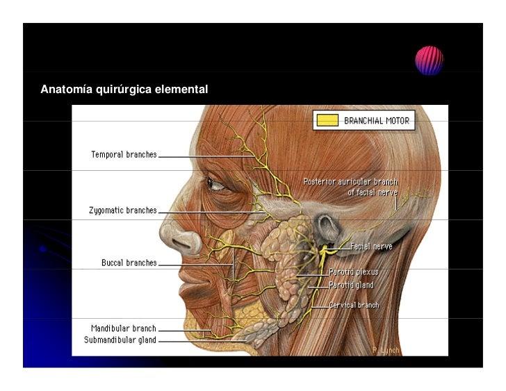Protesis de condilo mandibular