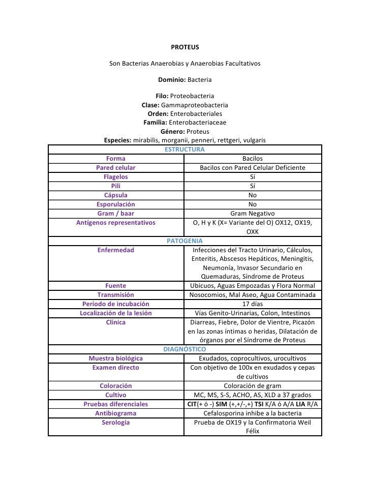 PROTEUS             Son Bacterias Anaerobias y Anaerobias Facultativos                              Dominio: Bacteria     ...