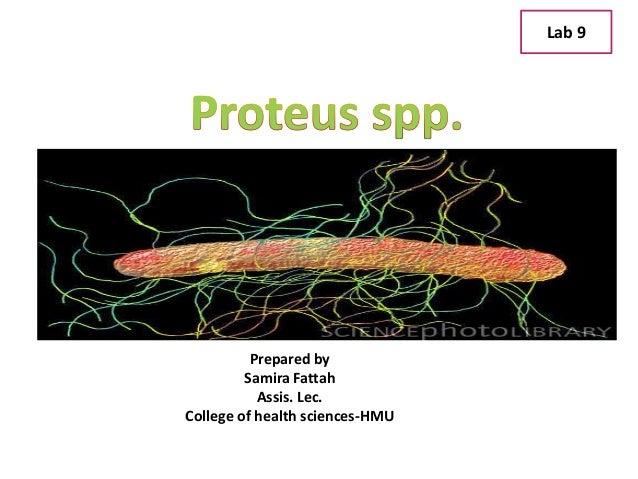 Lab 9 Prepared by Samira Fattah Assis. Lec. College of health sciences-HMU