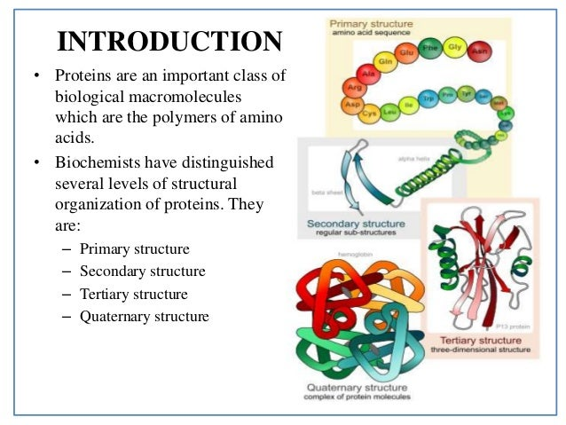 the structure of proteins The structure of proteins introduction campbell and farrell define proteins as polymers of amino acids that have been covalently joined through peptide bonds to form amino acid chains (61.