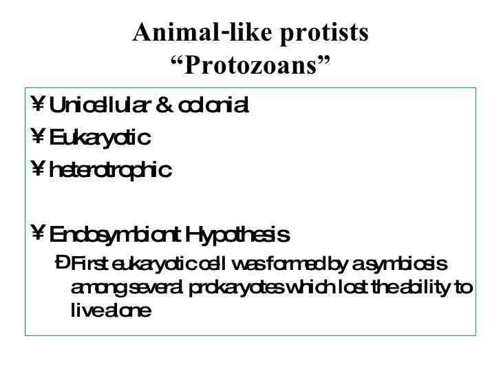 Protist notes
