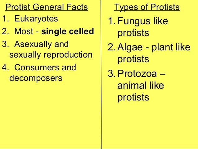 Do fungus like protists reproduce asexually