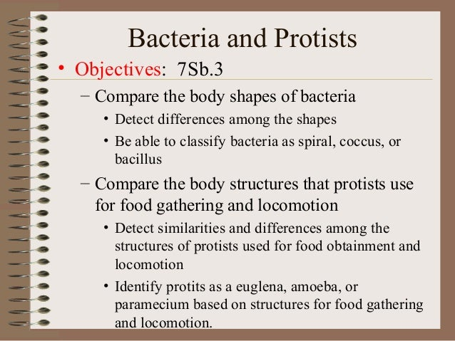 Bacteria and Protists• Objectives: 7Sb.3  – Compare the body shapes of bacteria     • Detect differences among the shapes ...