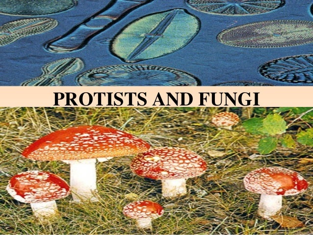 PROTISTS AND FUNGI