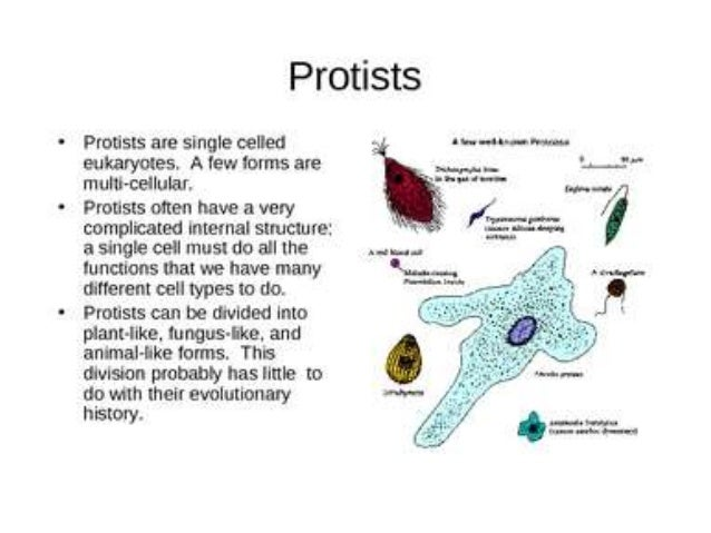 Protists science grade 7 – Protists Worksheet