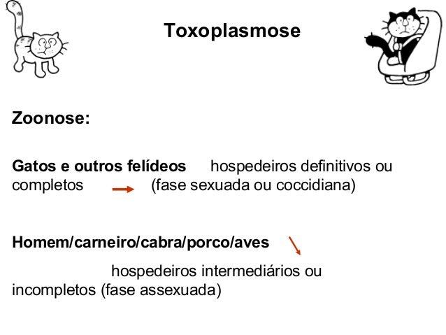 Toxoplasma gondii  Formas infectantes do Toxoplasma gondii  BBrraaddiizzooííttoo-- ddeennttrroo ddoo cciissttoo  -Geralmen...