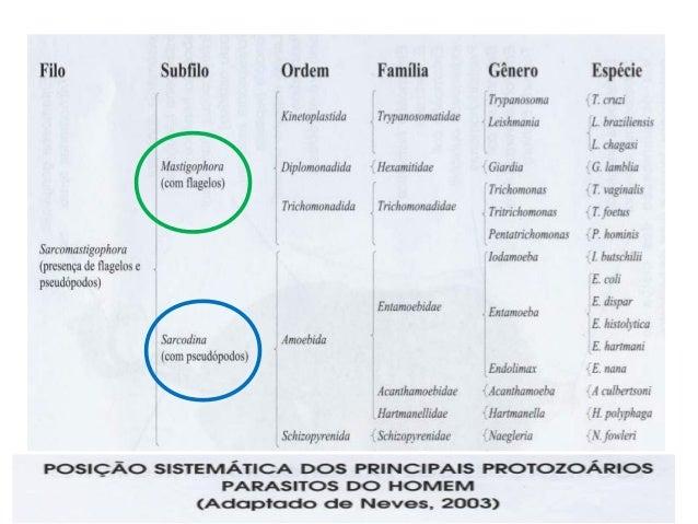 • Todos são parasitas obrigatórios  intracelulares;  • Ciclo Biológico: alternam a reprodução  sexuada e assexuada;