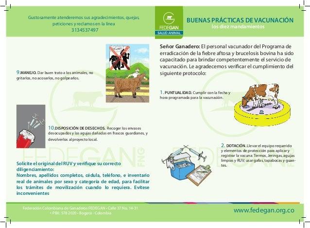 BUENAS PRÁCTICAS DE VACUNACIÓN  los diez mandamientos  Señor Ganadero: El personal vacunador del Programa de erradicación ...