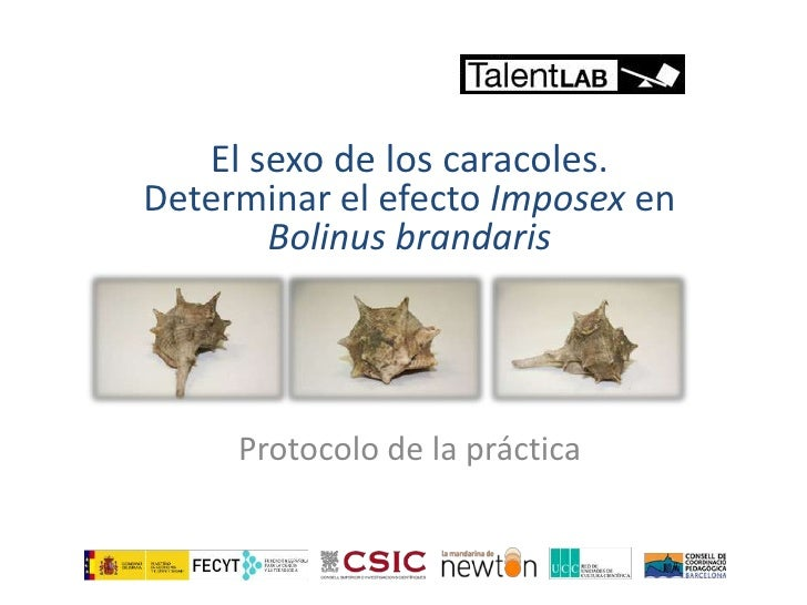 Protocol practica imposex_talent_lab_csic_cast