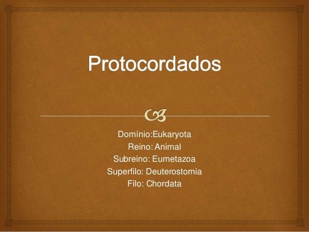 Domínio:Eukaryota Reino: Animal Subreino: Eumetazoa Superfilo: Deuterostomia Filo: Chordata