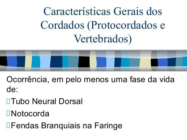 Características Gerais dos Cordados (Protocordados e Vertebrados)  Ocorrência, em pelo menos uma fase da vida de: Tubo Neu...