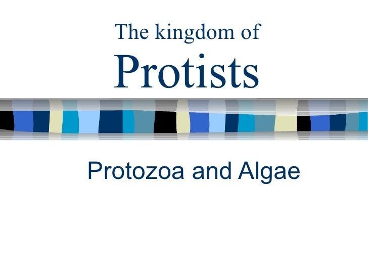 The kingdom of Protists Protozoa and Algae