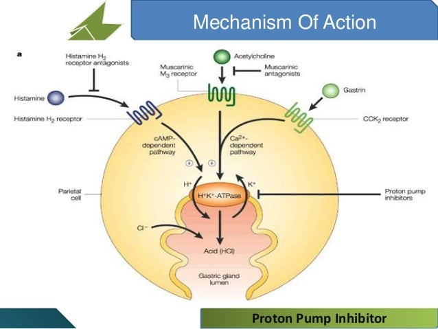 proton pump inhibitors mechanism of action proton-pump-inhibitor-9-638.jpg?cb=1440586275