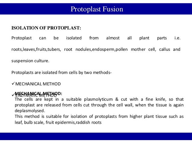 Protoplast FusionISOLATION OF PROTOPLAST:Protoplast    can     be   isolated    from     almost    all   plant    parts   ...