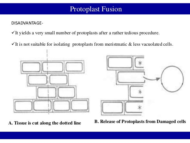 Protoplast Fusion DISADVANTAGE- It yields a very small number of protoplasts after a rather tedious procedure. It is not...