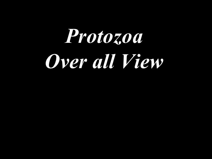 Protozoa Over all View