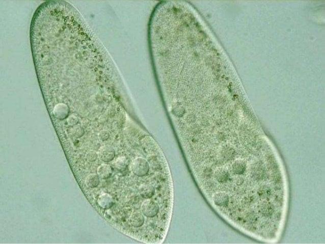 images of heterotrophic nutrition