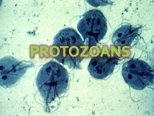 At the end of this unit, the student is able to:  Classify the Protozoans  Describe the morphology of each protozoa  Ex...