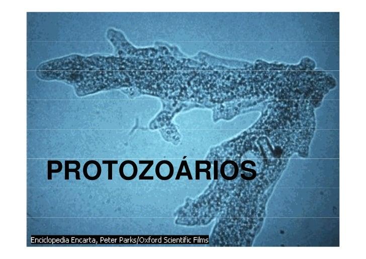 PROTOZOÁRIOS       Á