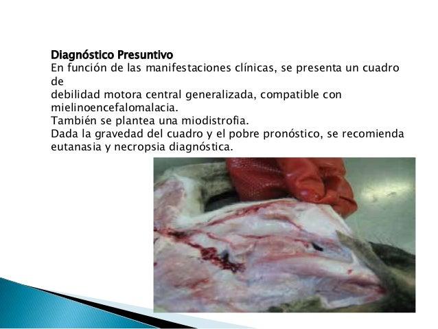 El agente causal de la Giardiasis en perros y gatos es un protozoario del intestino delgado de los mamíferos , llamado Gia...