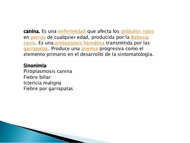 Protozoarios Slide 3
