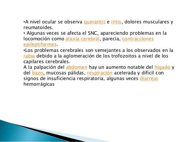 DIAGNOSTICO Confirmativo Se realiza por la identificación de los parásitos en los eritrocitos de frotis preferiblemente de...