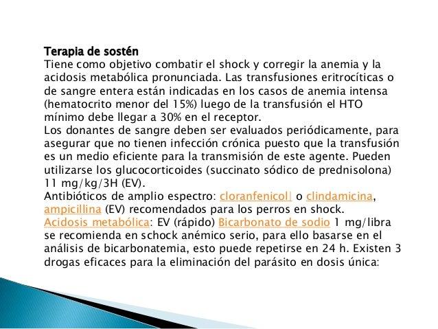 EN RESUMEN •Combatir el Shock •glucocorticoides (Prednisolona) 11 mg / Kg., cada 3 horas (IV). •antibiótico de amplio espe...