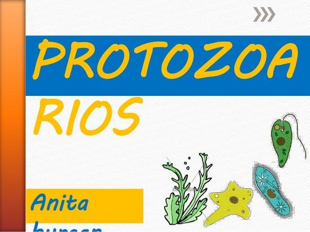 PROTOZOA RIOS Anita