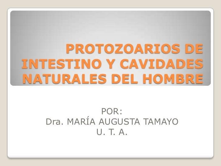 PROTOZOARIOS DE INTESTINO Y CAVIDADES NATURALES DEL HOMBRE<br />POR: <br />Dra. MARÍA AUGUSTA TAMAYO<br />U. T. A.<br />