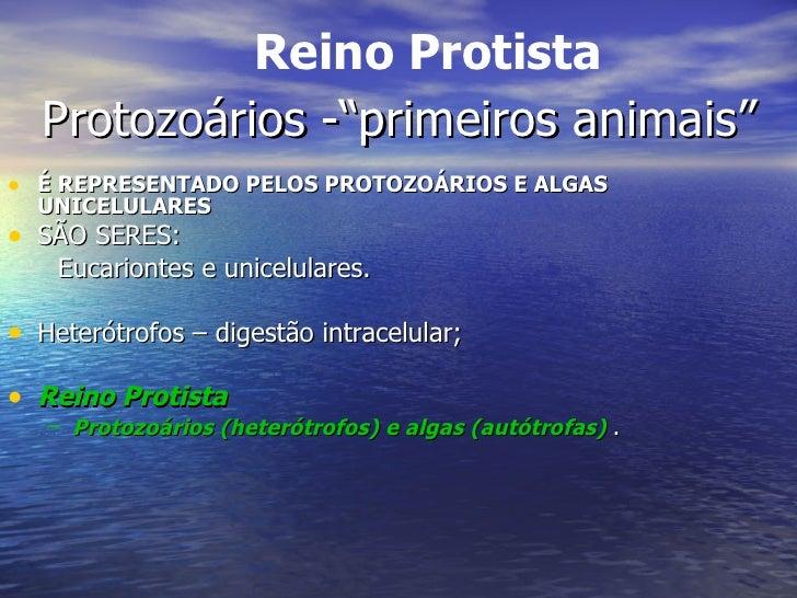 """Protozoários -""""primeiros animais"""" <ul><li>É REPRESENTADO PELOS PROTOZOÁRIOS E ALGAS UNICELULARES </li></ul><ul><li>SÃO SER..."""