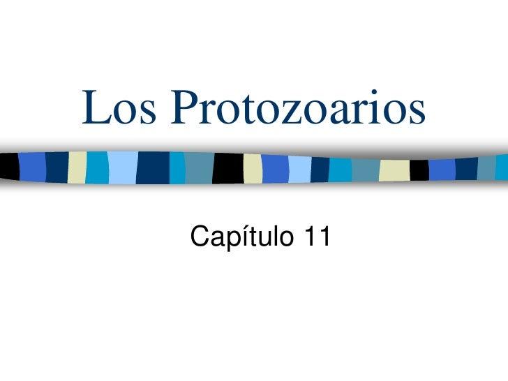 Los Protozoarios     Capítulo 11