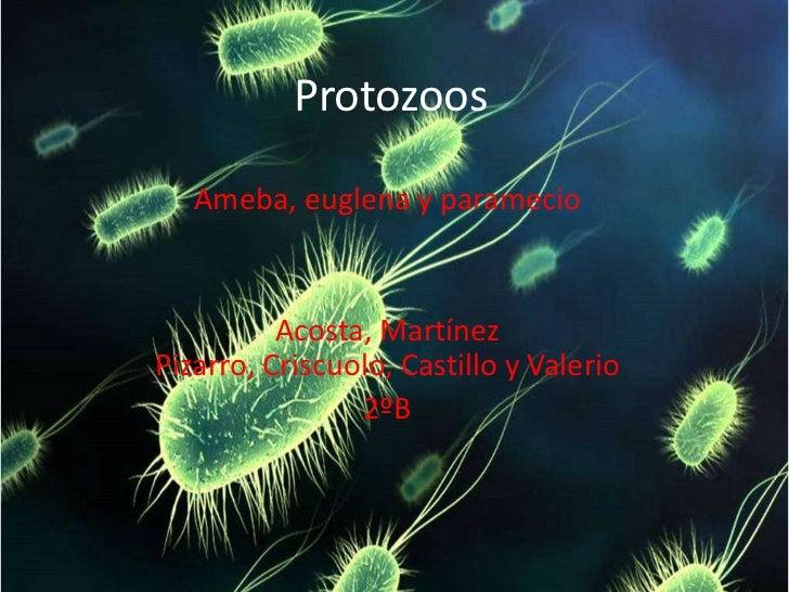Protozoos<br />Ameba, euglena y paramecio<br />Acosta, Martínez Pizarro, Criscuolo, Castillo y Valerio<br />2ºB<br />