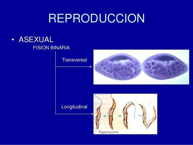 Reproducci n sexual fisica multiple