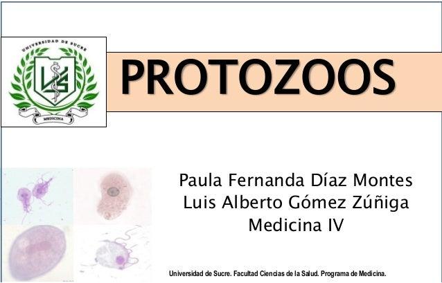 PROTOZOOS Universidad de Sucre. Facultad Ciencias de la Salud. Programa de Medicina. Paula Fernanda Díaz Montes Luis Alber...