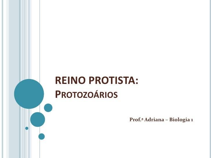 REINO PROTISTA:PROTOZOÁRIOS             Prof.ª Adriana – Biologia 1
