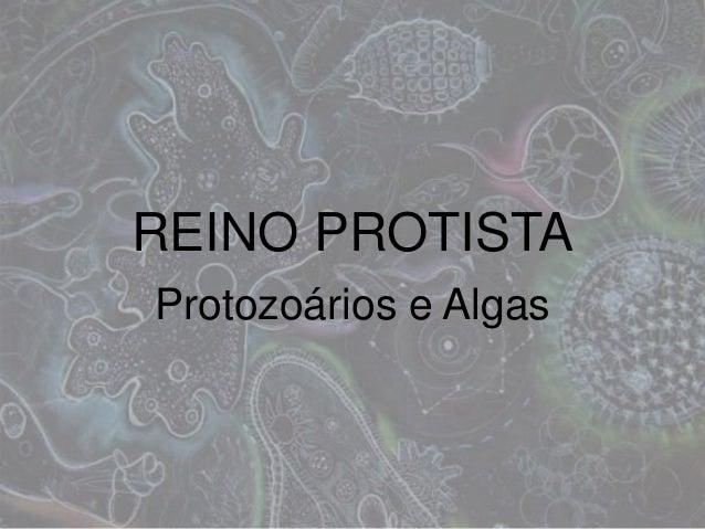 REINO PROTISTA Protozoários e Algas