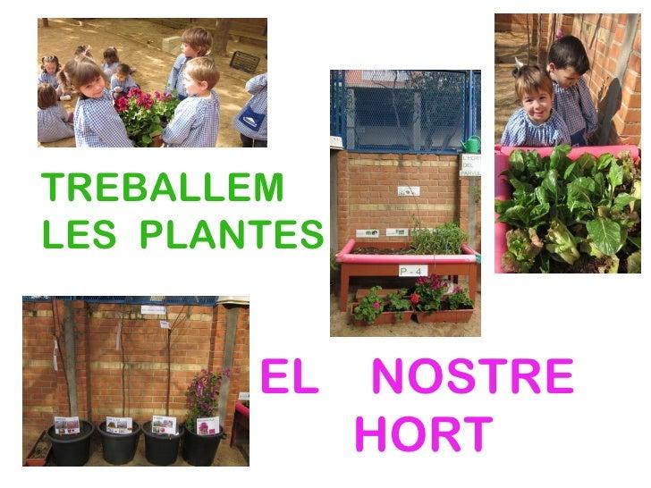 TREBALLEMLES PLANTES        EL    NOSTRE              HORT