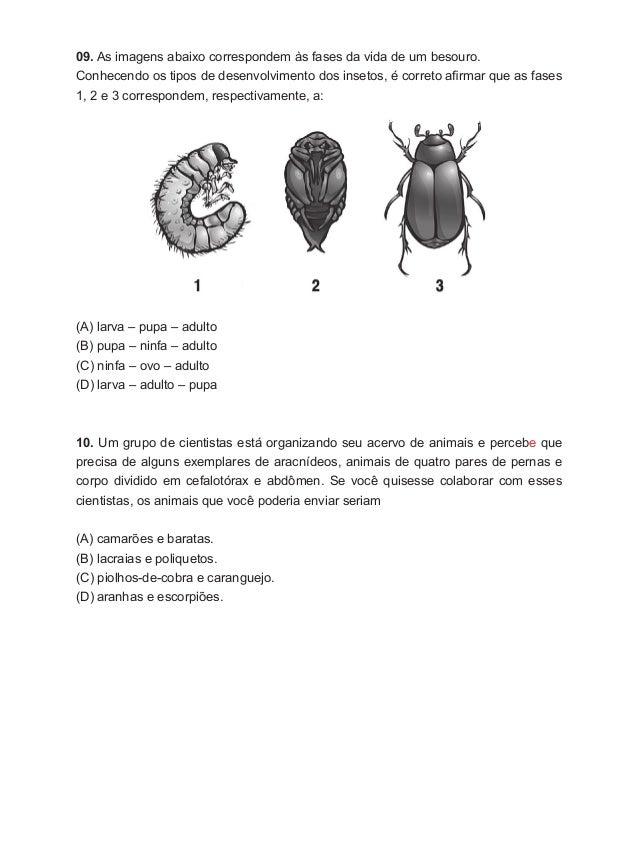 09. As imagens abaixo correspondem às fases da vida de um besouro. Conhecendo os tipos de desenvolvimento dos insetos, é c...