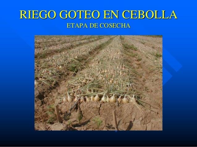 Provenagro presentacion riego por goteo - Tubo riego por goteo ...