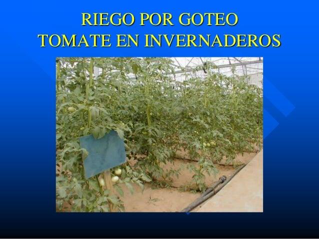 Provenagro presentacion riego por goteo - Tuberias de riego por goteo ...
